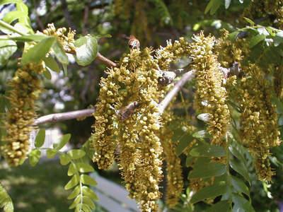 Изобилие от цветен прашец по растенията